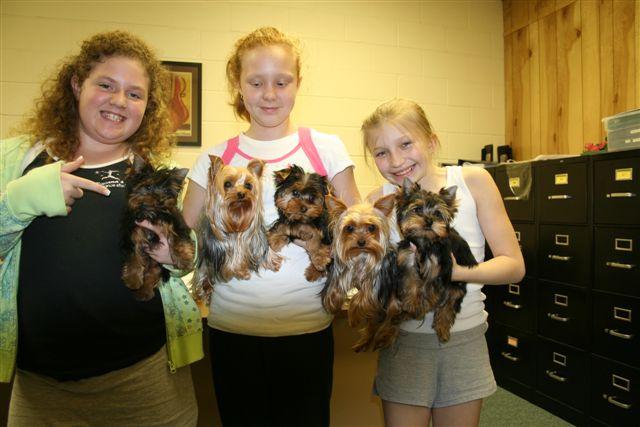 Yorkie Poo Puppies For Sale In Georgia. yorkie week old yorkie-poo puppies